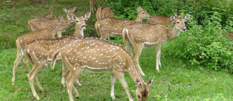 Kerala Recreation And Wildlife Tour